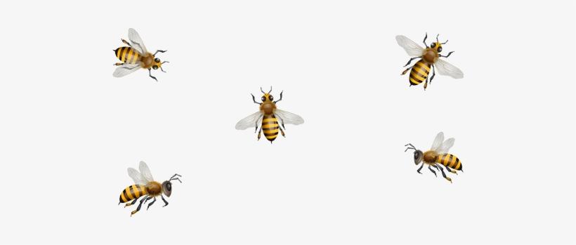 Clip Art Honeycombs Bees.
