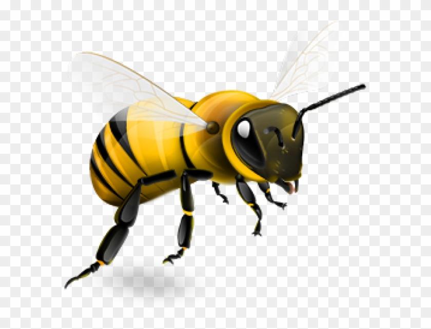 Bee Png.