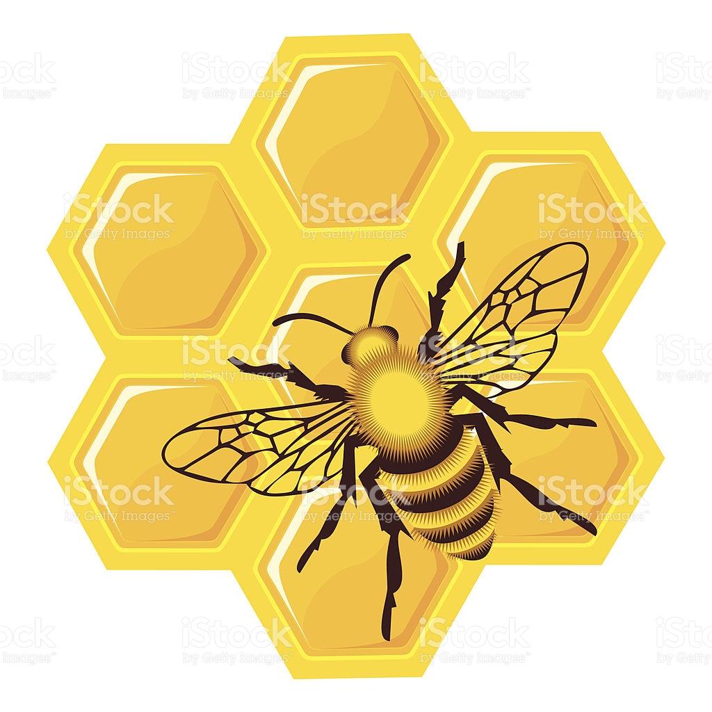 Bee On Honey Cells stock vector art 131405093.