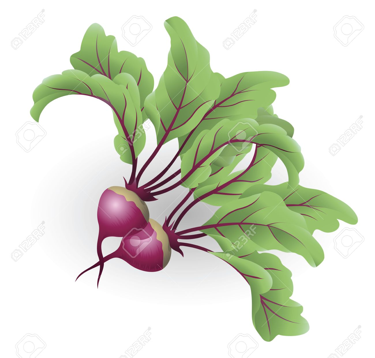 4,943 Beet Stock Vector Illustration And Royalty Free Beet Clipart.
