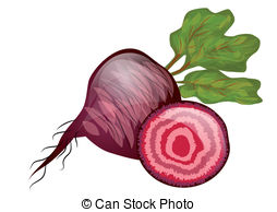 Beetroot Vector Clipart EPS Images. 1,114 Beetroot clip art vector.