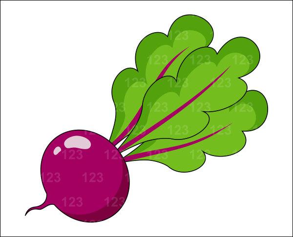 Clip art beets.