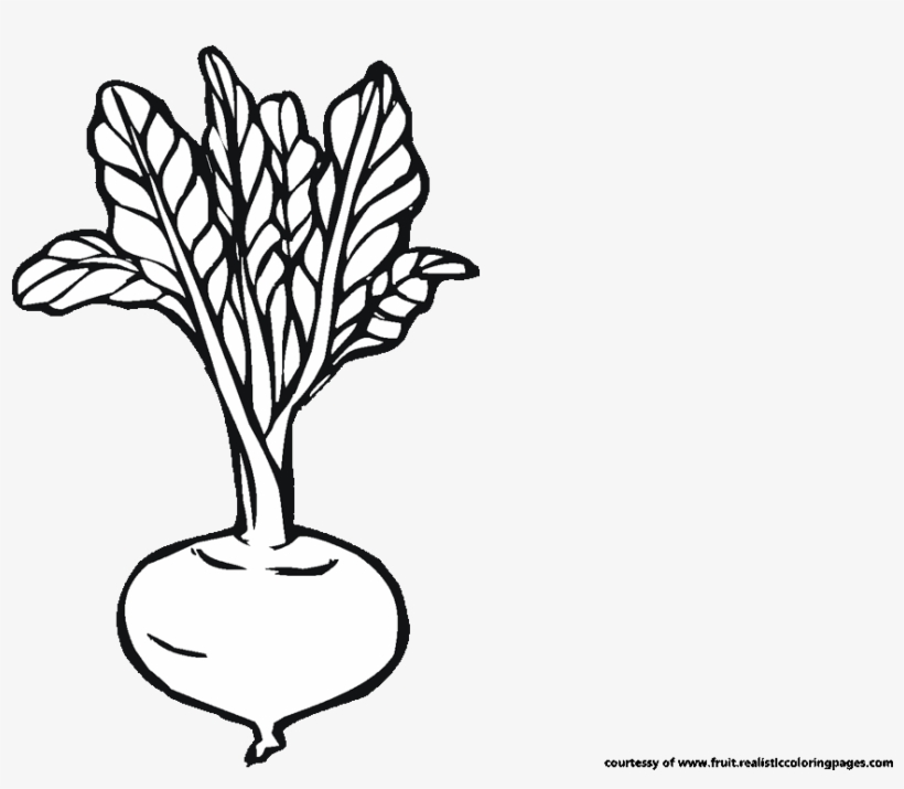 Beetroot Clipart Black And White.