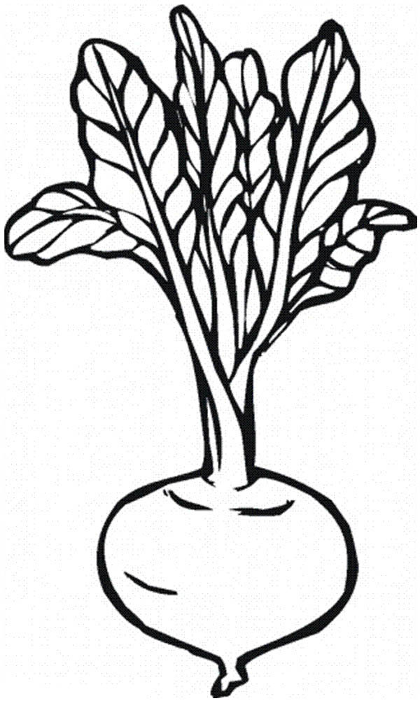 Free Beet Clipart Black And White, Download Free Clip Art.