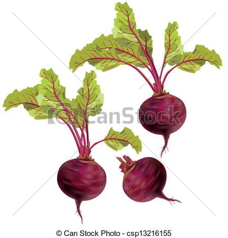 Clipart Vector of Vegetable beet isolated on white background.