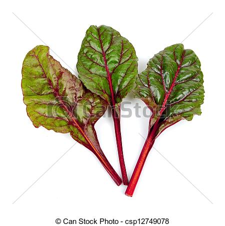 Picture of spinach beet leaves isolated on the white background.