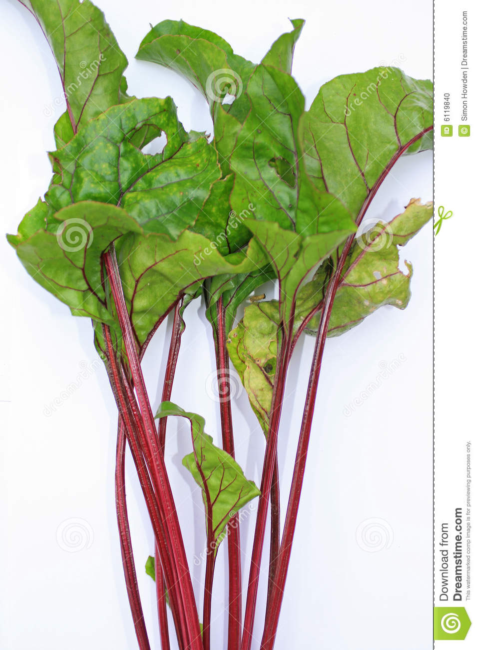 Beetroot Leaves Stock Photo.
