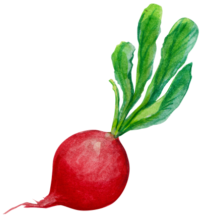 Beet PNG Images.