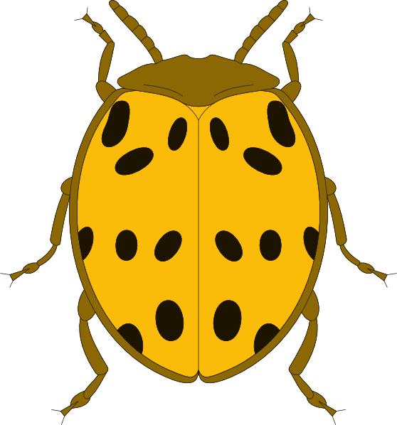 Yellow And Black Spotted Beetle Clip Art at Clker.com.