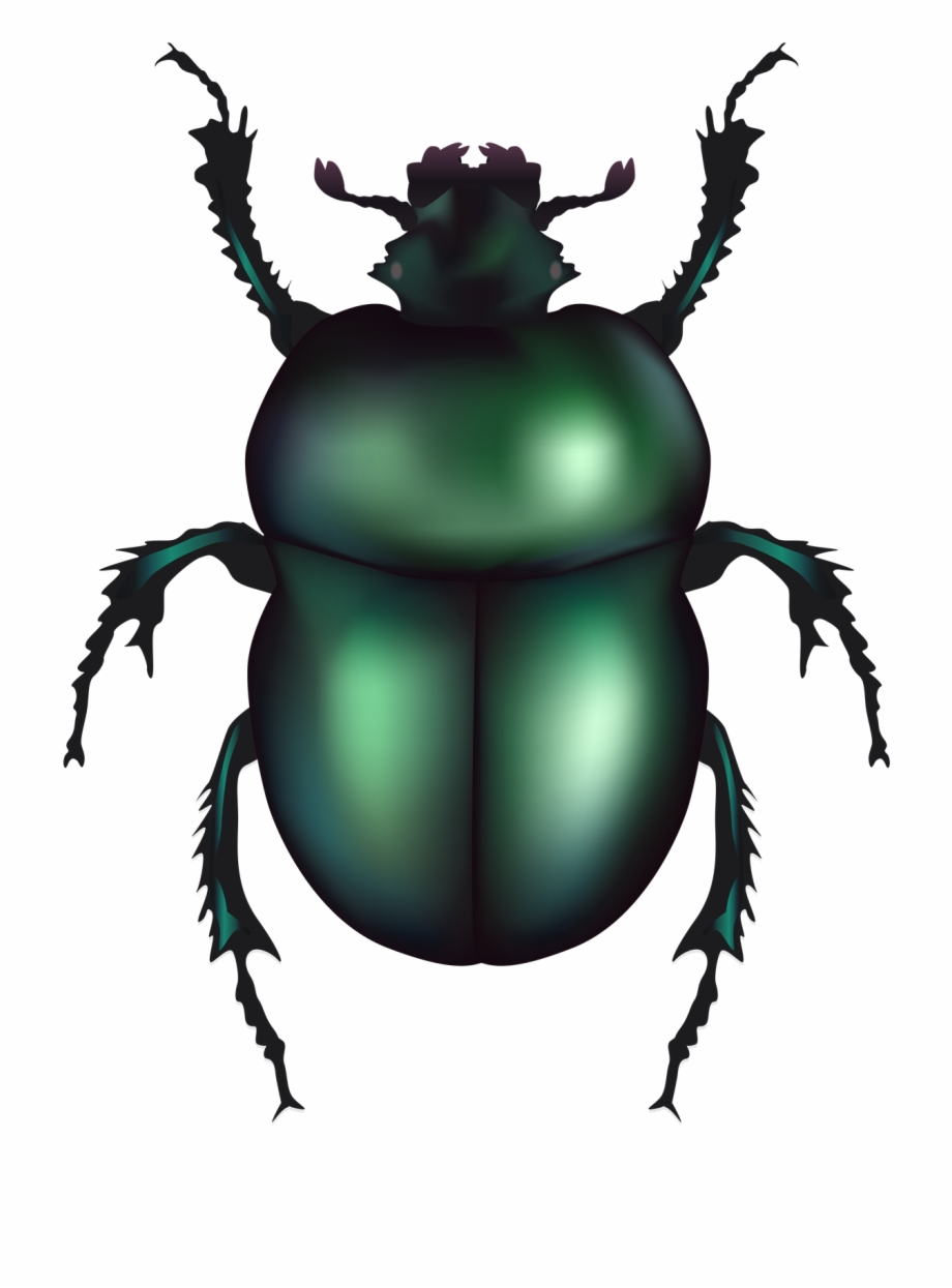 Free Beetle Clipart Black And White, Download Free Clip Art.