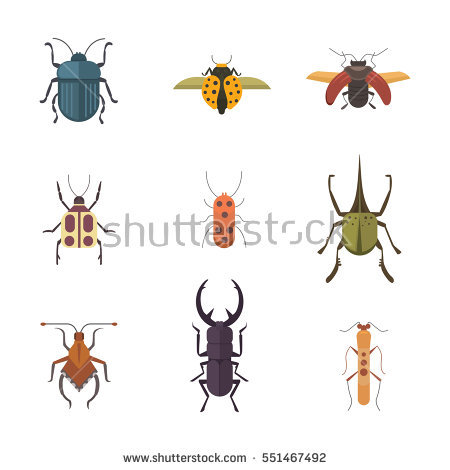 Beetle Stock Images, Royalty.