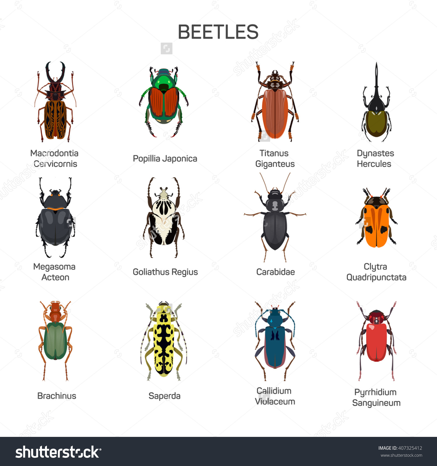 Bugs Vector Set Flat Style Design Stock Vector 407325412.