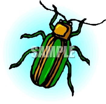 Green Beetle.