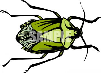 Green Shelled Flower Beetle Clip Art.
