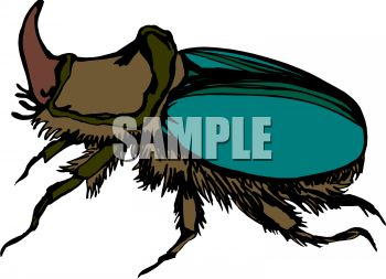 Royalty Free Clipart Image: Horned Beetle Insect.