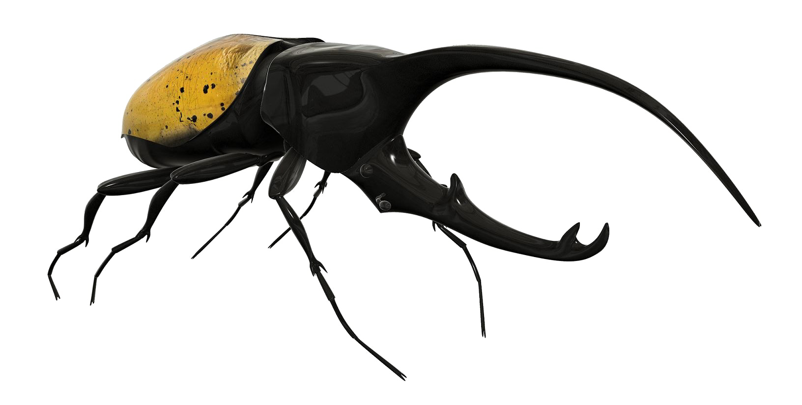 Beetle PNG Image Background.