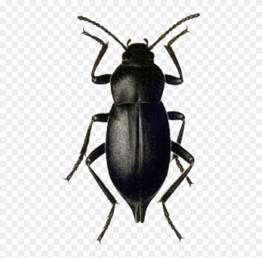 Download Beetle Black Png Images Background.