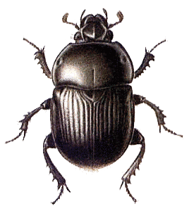 Beetle Black Large transparent PNG.