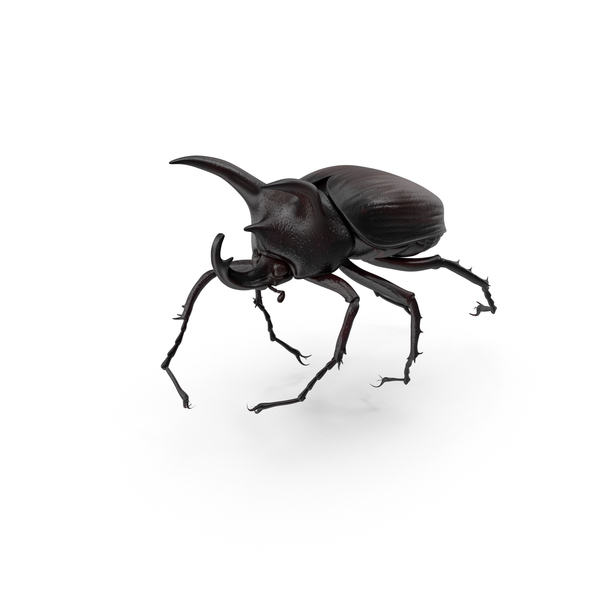 Rhinoceros Beetle PNG Images & PSDs for Download.