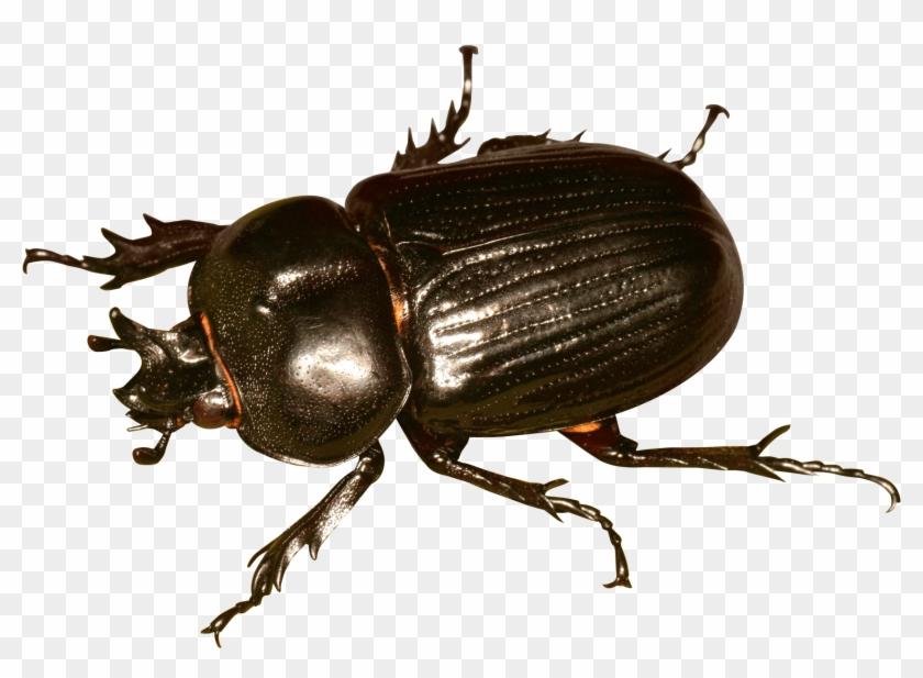 Beetle Bug Png Transparent Image.