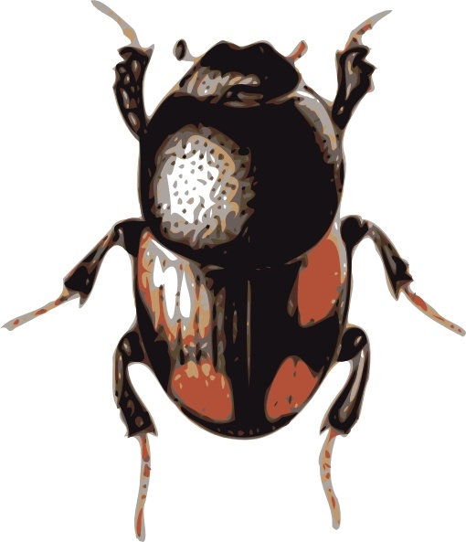 Insect Beetle clip art Free vector in Open office drawing svg.