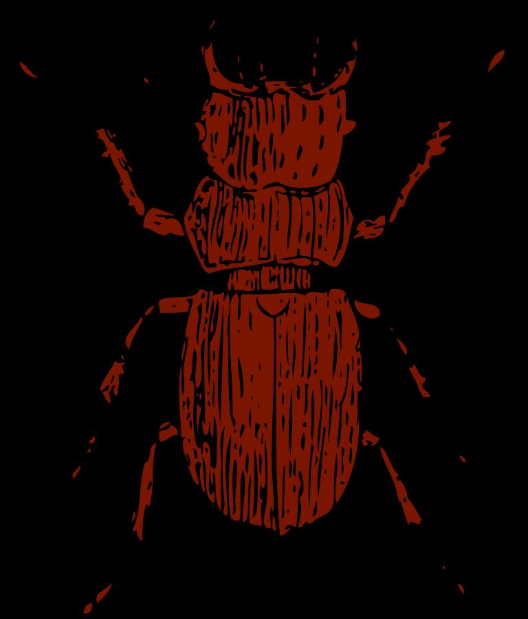 Beetle Clipart.