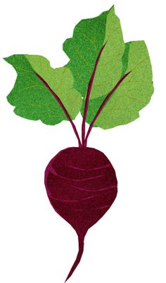 Beetroot clipart - Clipground