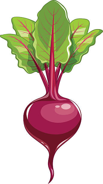Best Beets Illustrations, Royalty.