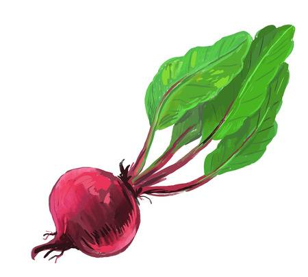10,484 Beets Stock Illustrations, Cliparts And Royalty Free Beets.