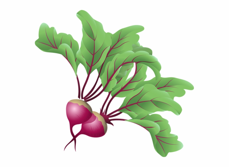 Beets Vegetable Clip Art.