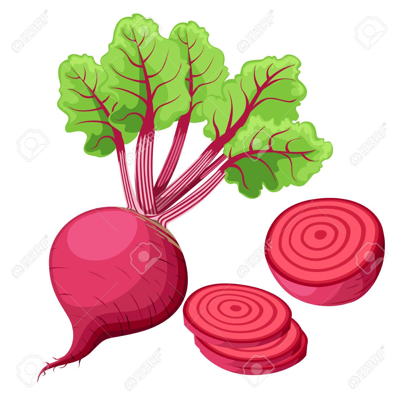 Vector beets isolated on background. Red beetroot whole, cut,...