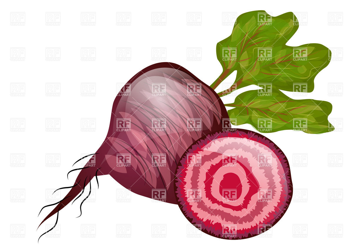 Beetroot with beet tops isolated on a white background Vector.