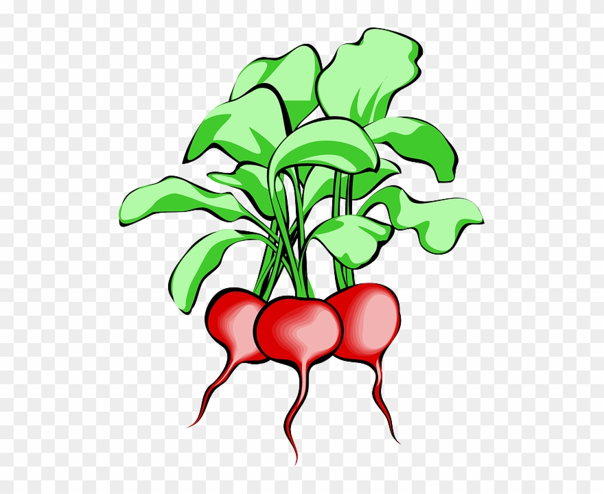 Beet, Beetroot, Vegetable, Root, Plant, Food, Raw.