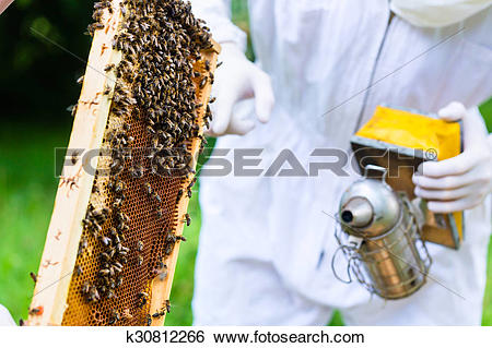 Stock Images of Beekeeper with smoker controlling beeyard and bees.