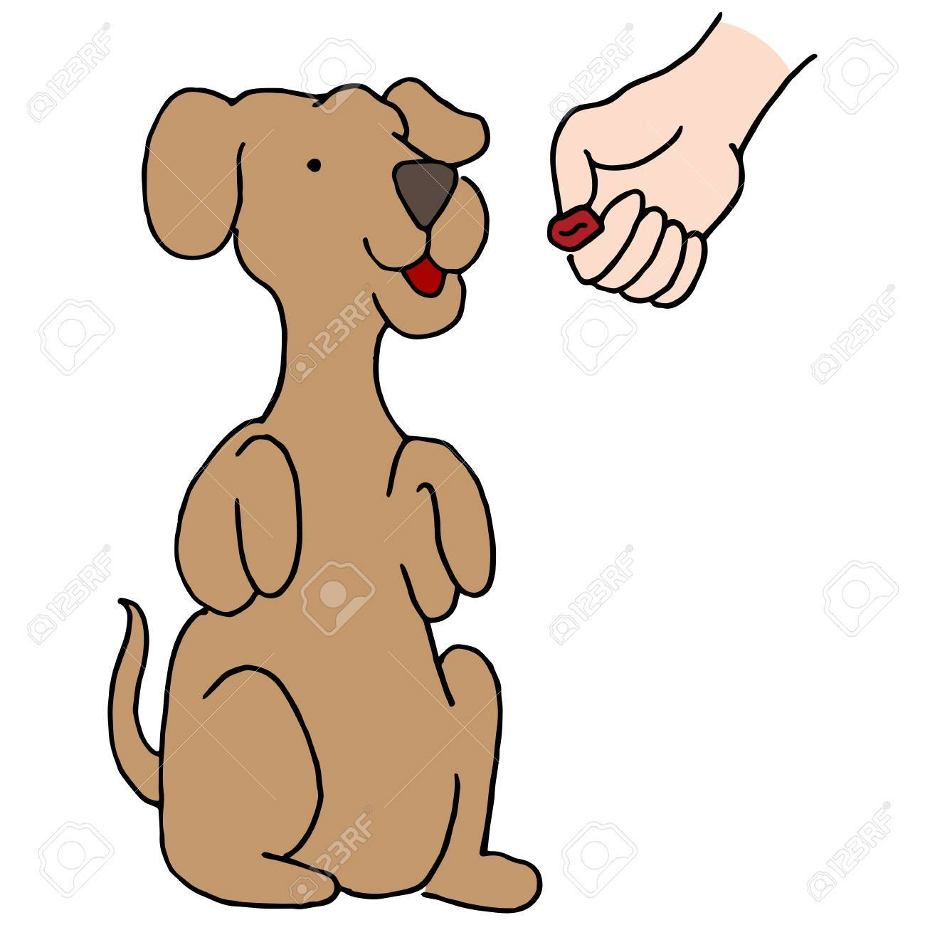 An image of a Dog Begging Treat..