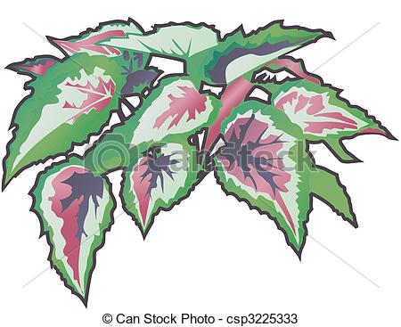 Begonia Illustrations and Stock Art. 105 Begonia illustration.