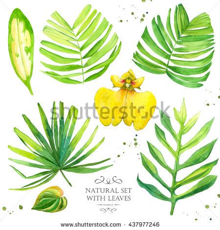 Begonia Leaf Stock Photos, Royalty.