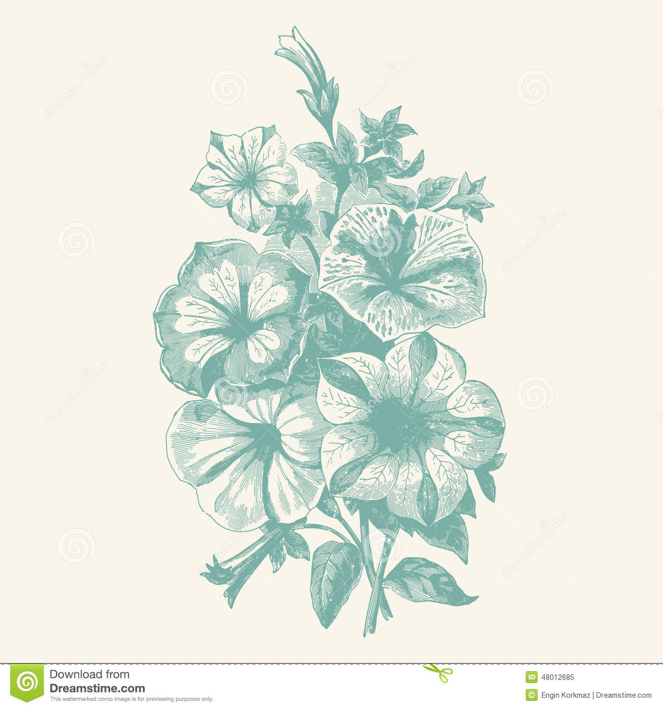Begonia Stock Illustrations.