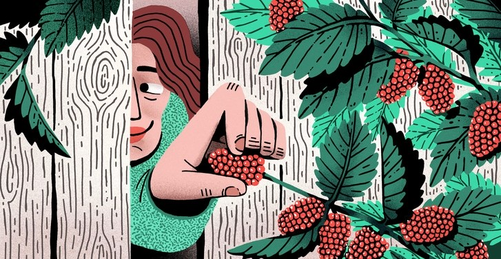The Lost Art of Stealing Fruit.