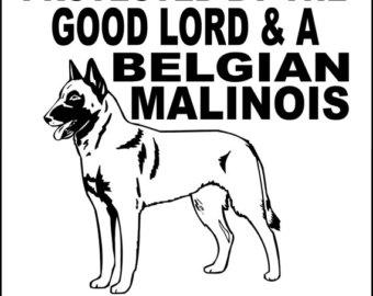 Belgian malinois.