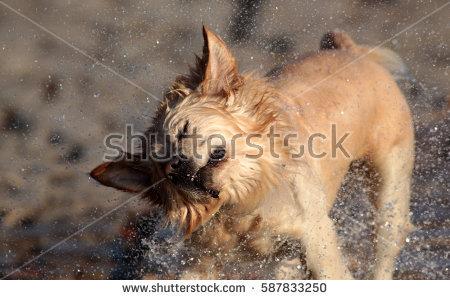 Water Shaking Off Banco de imágenes. Fotos y vectores libres de.