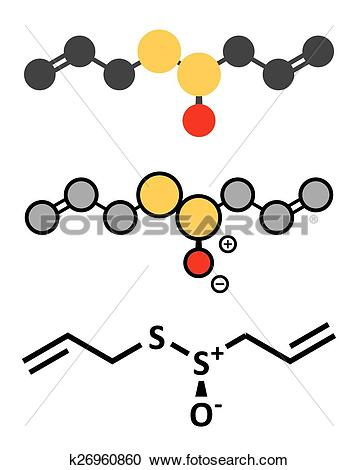 Clipart of Allicin garlic molecule. Formed from alliin by the.