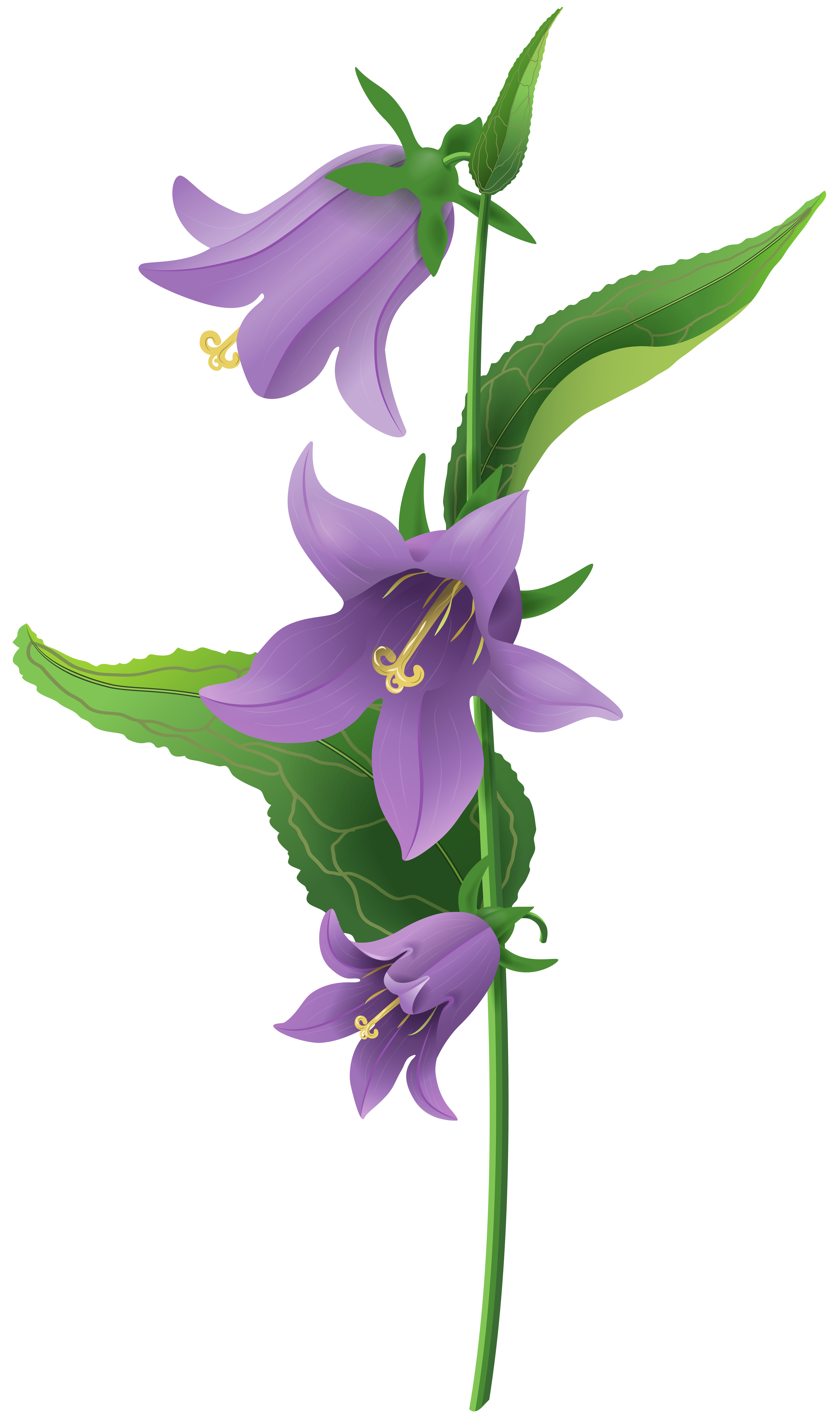 Wild Purple Bell Flower PNG Clip Art Image.