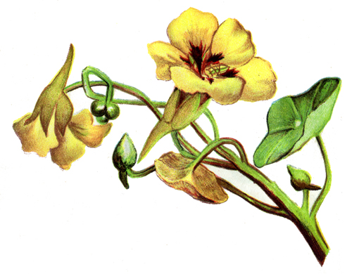 Bell Flower Clipart Clipground