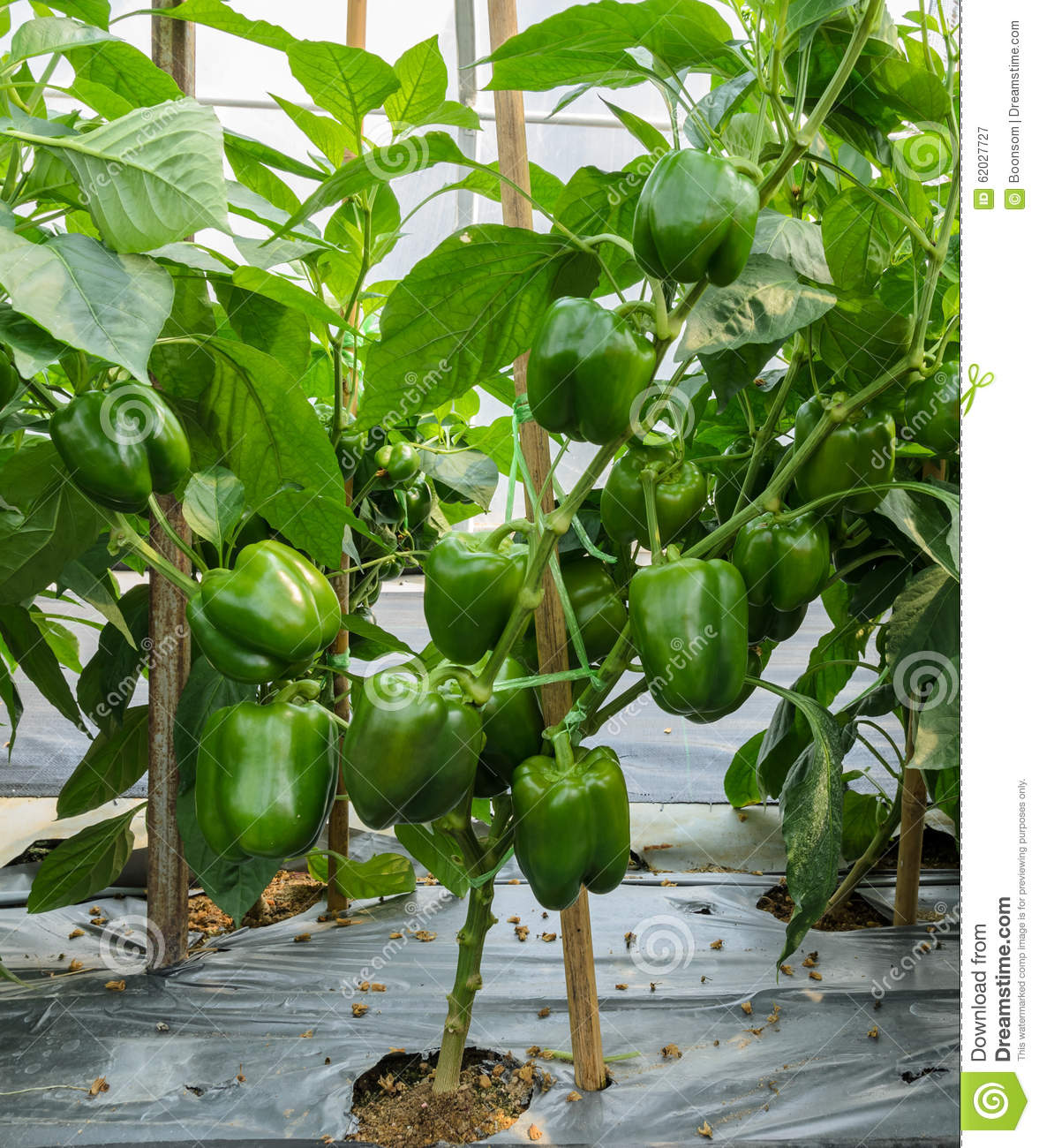 Bell flower greenhouse clipart clipground - Planting pepper garden ...