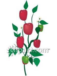 Pepper Plant Clipart.