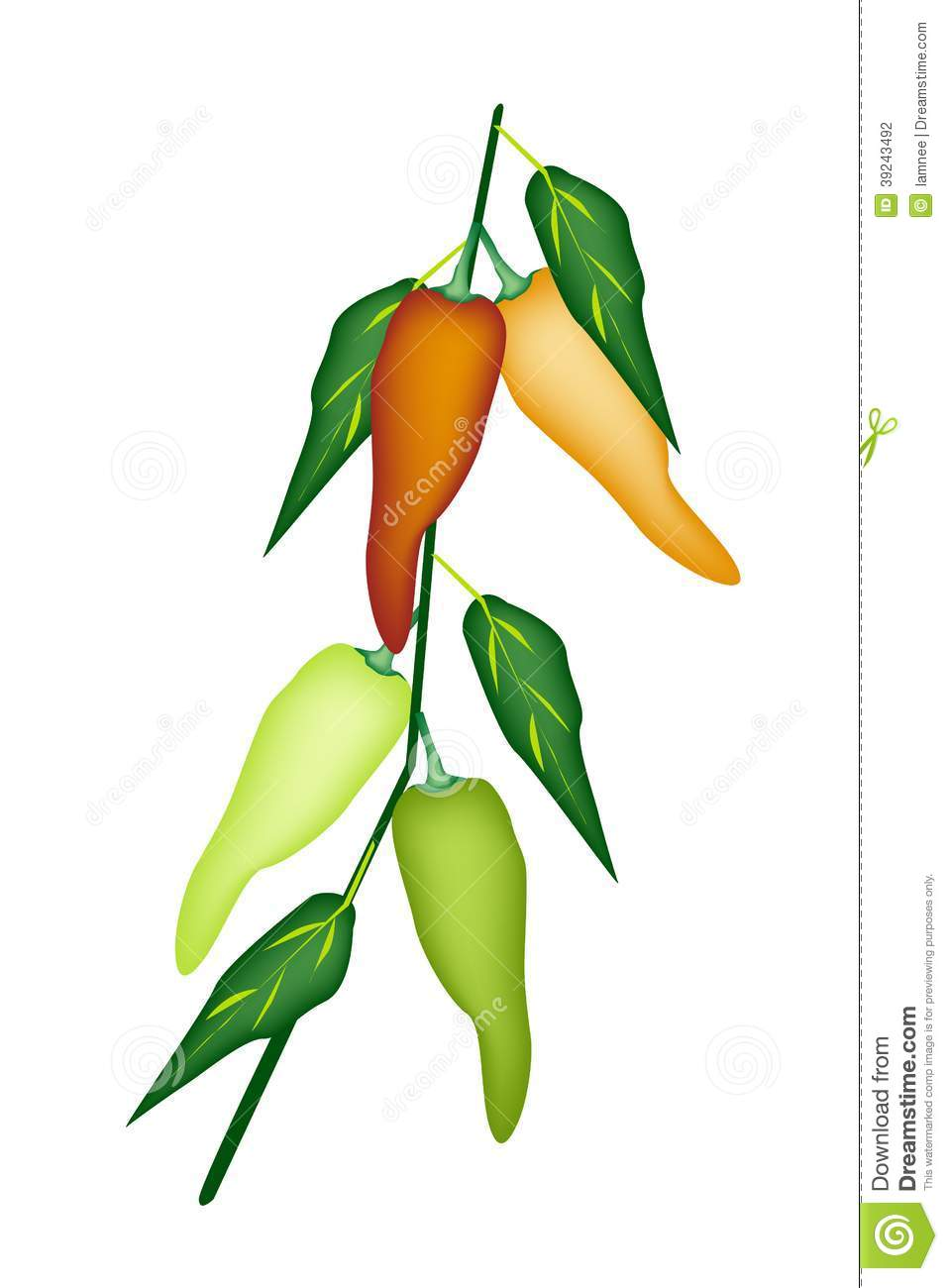 Sweet Pepper Or Jalapenos Pepper Plant Stock Vector.