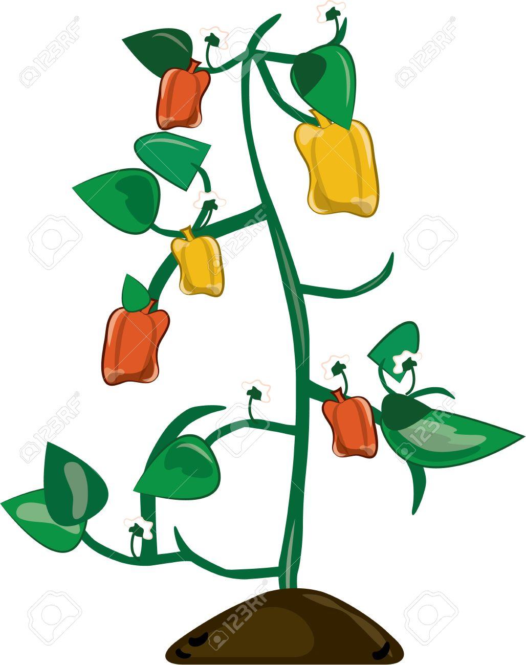 這辣椒廠是一個豐富多彩的除了你的園藝展示。充滿了所有的顏色會照亮.
