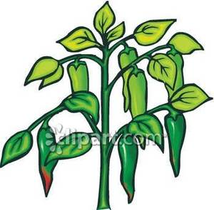 Green Pepper Clipart.