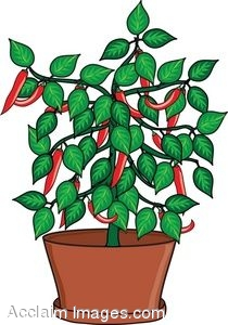Clip Art of a Pepper Plant in a Pot.